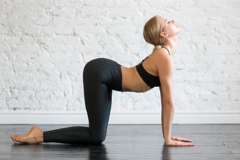 yoga kedi inek pozu